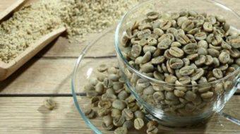 Svetol (Café vert + Thé vert) : un brûleur de calories puissant
