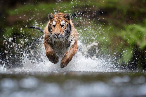 baume du tigre contre le rhume