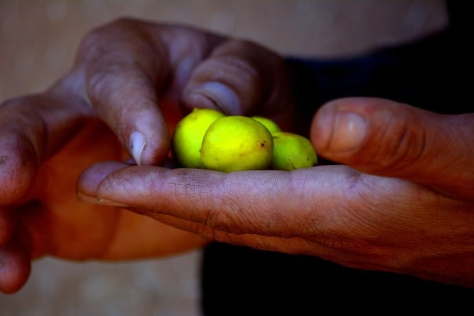 huiles essentielle d'argan