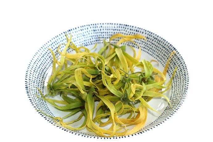 la plante ylang-ylang